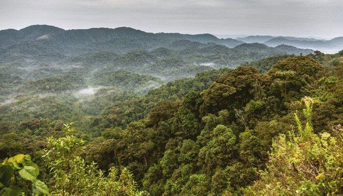 Wild jungle and clouds in Rwanda